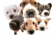 Štěrboholský majitel psa