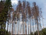 Informace pro vlastníky lesů